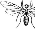 A sketch of a carpenter ant