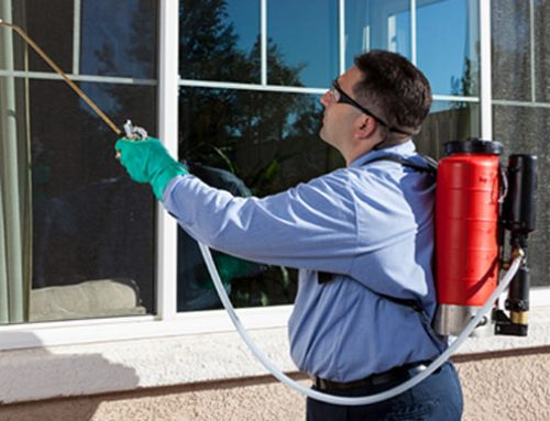What Is an Exterminator?