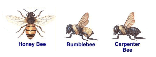 Professional Bee Removal & Control Services in Portland ...