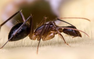 Early Signs of Carpenter Ant Infestation in Portland Oregon