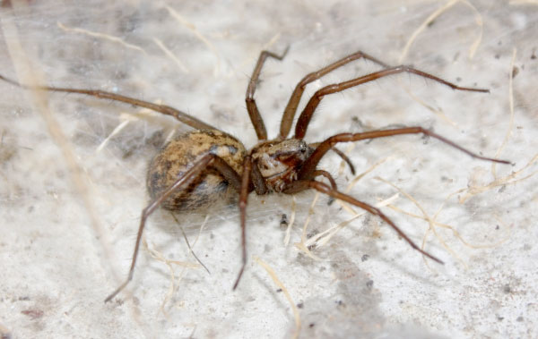 Spider Pest Control: Summer Brings Out these 8-legged pests