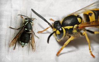 How to Safely Remove Wasp and Hornet Nests from Your Portland, Oregon Home