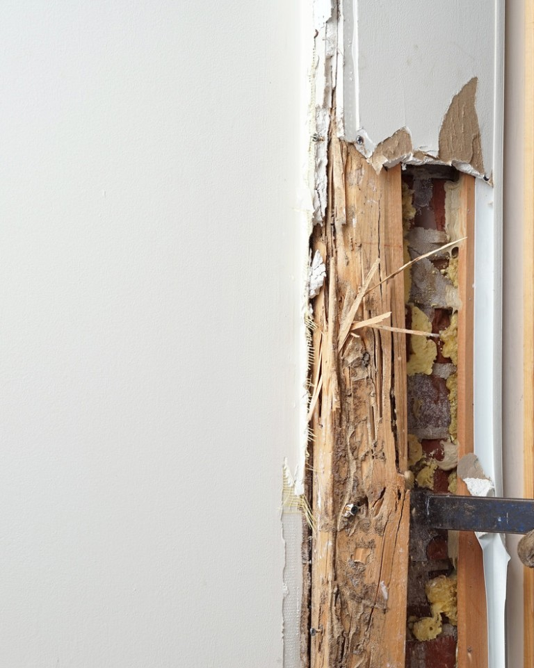 Termite infestation damaged interior wall