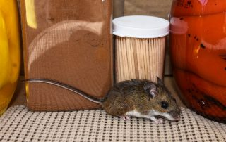A mouse in the pantry