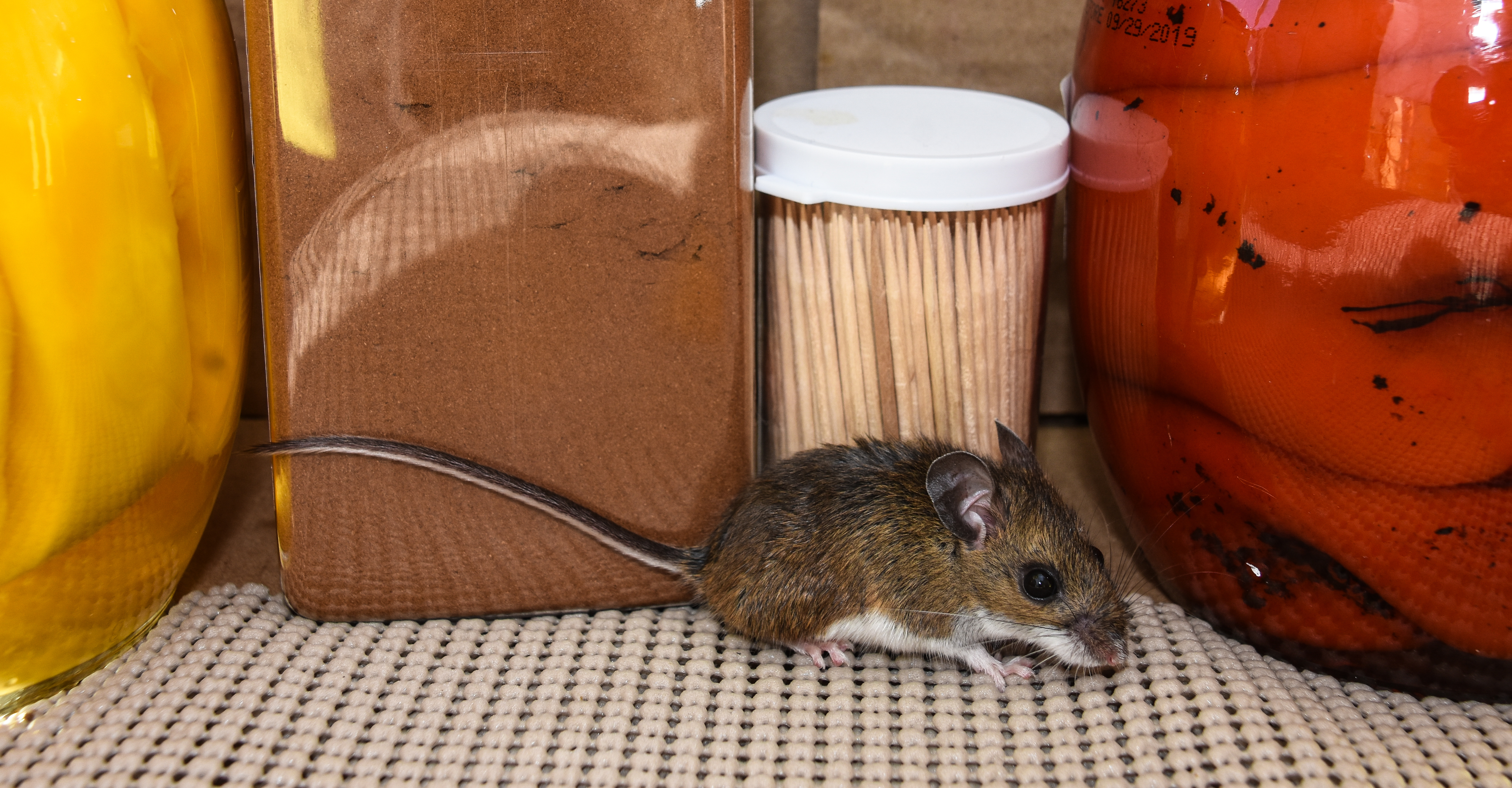 How Much Does Pest Control Cost?